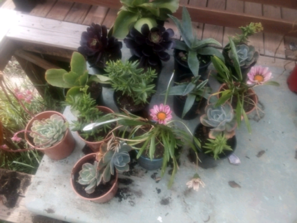 14 potted plants