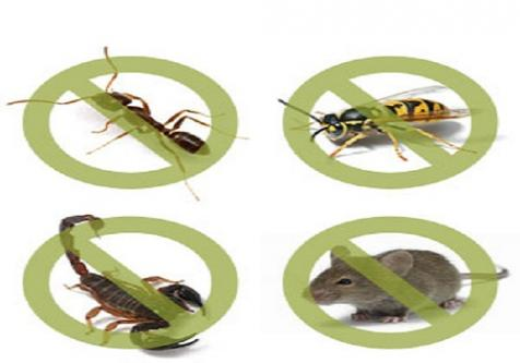 The Best Pest Control Management in Youngtown