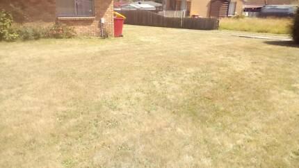 $50 lawn special
